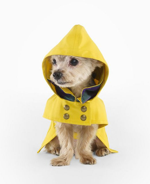 Ralph Lauren Dog Raincoat by drollgirl, via Flickr