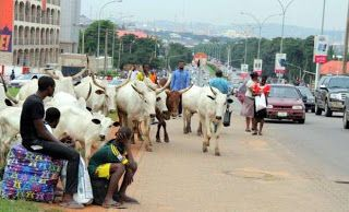 Nigerian Navy arrests farm animals rustlers in Kaduna recovers 312 livestock  Whatsapp / Call 2349034421467 or 2348063807769 For Lovablevibes Music Promotion   Personnel of the Nigerian Navy School of Armament and Technology Kachia have recovered over 312 stolen cows from cattle rustlers and arrested two suspects in some parts of Kaduna State. The Commandant of the school Navy Cmdr. Timothy Dakwat while handing over the animals to officials of Operation Yaki the state security outfit said…