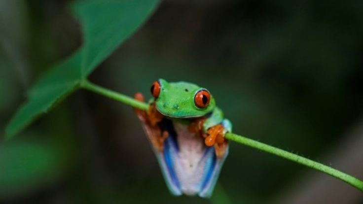 A massive asteroid strike that wiped out the dinosaurs millions of years ago created room for frogs to colonize the Earth said a study Monday that shows how frogs became among the most diverse vertebrates in the world. As many as 10 types of frogs are believed to have survived the mass extinction