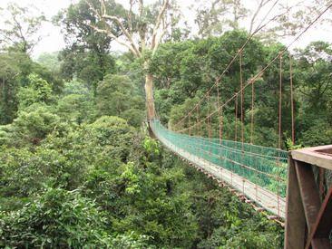 Danum Valley Conservation area, Borneo Rainforest