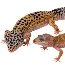 If you have a reptile as a pet then you must be aware that it is very important to take a very good care of them and for this you must select reptile supplies very carefully. Read this article for more info.