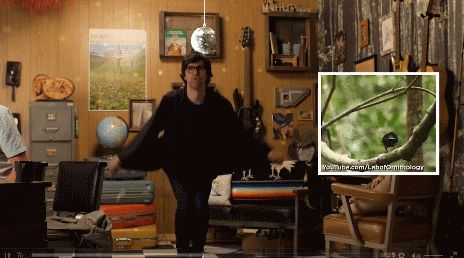 "Link dances like a riflebird on the #GoodMythicalMorning episode ""Dancing Like Exotic Animals."""
