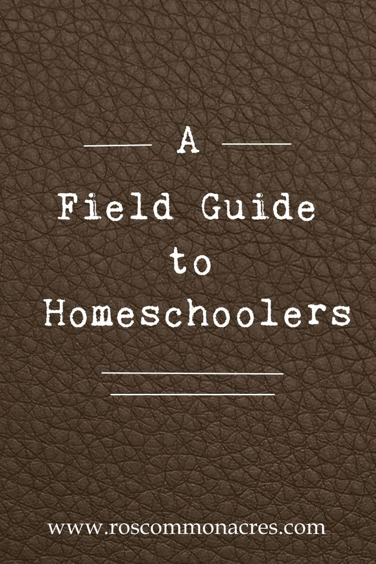 Unexpected encounters with homeschoolers outside their enclosures can be disconcerting. They typically start with generalized anxiety induced by seeing children outside during school hours and quickly progress to a host of questions the startled observer feels need to be answered.