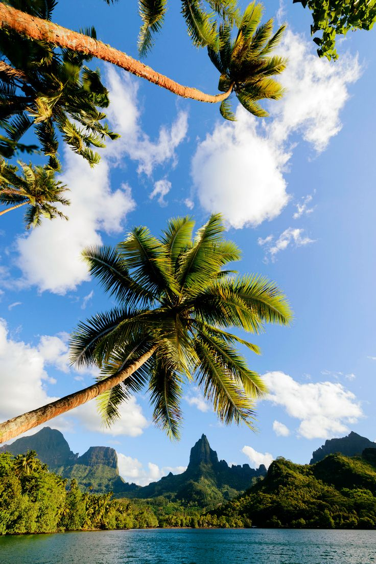 View on Mount Rotui on Moorea, Society Islands, French Polynesia. Credit: C. McLennan