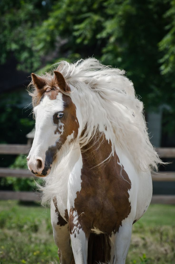 Beutiful Houses 3715 Best Horse Images On Pinterest  Horses Pretty Horses And