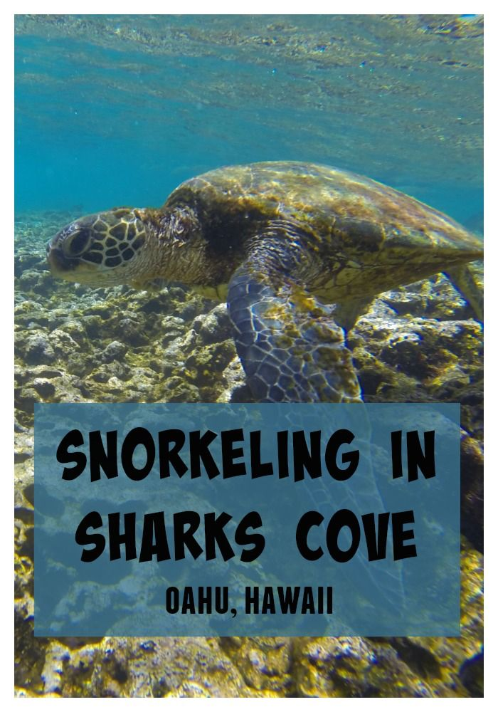 One of the best snorkeling spots in Hawaii - Sharks Cove on the North Shore of Oahu.