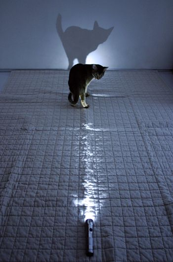 light & cat