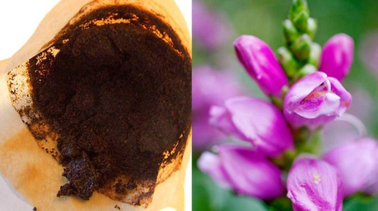 Kaffesump tar bort dåliga lukter, ohyra och ingrodd smuts. Men kan även ge bättre skörd, laga möbler och rensa avlopp. Efter dessa tips kommer du aldrig mer kasta kaffesumpen!