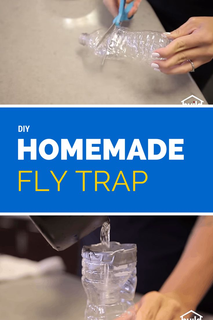 How to make a homemade fly trap using a water bottle. DIY homemade fly trap with step by step instructions http://www.fightbugs.com/homemade-fly-trap/