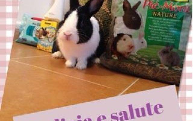 Come passare da un coniglietto ad un coniglietto super felice! #sissylovetv #beautybunnylove #conigli
