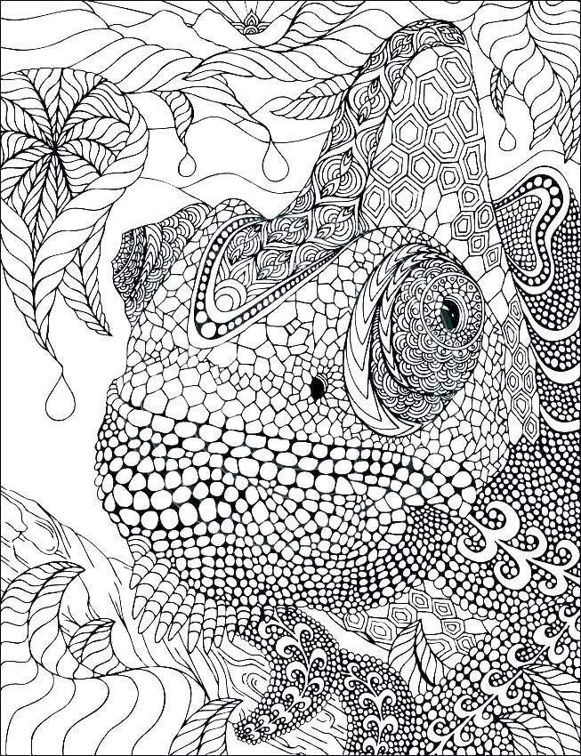 Biology Coloring Book With Pages Corner Apologia Advanced Boo ...