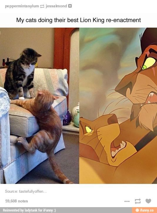 scar and mufasa lion king - Google Search. I just love this, Disney and cats what a mix! I love the lion king