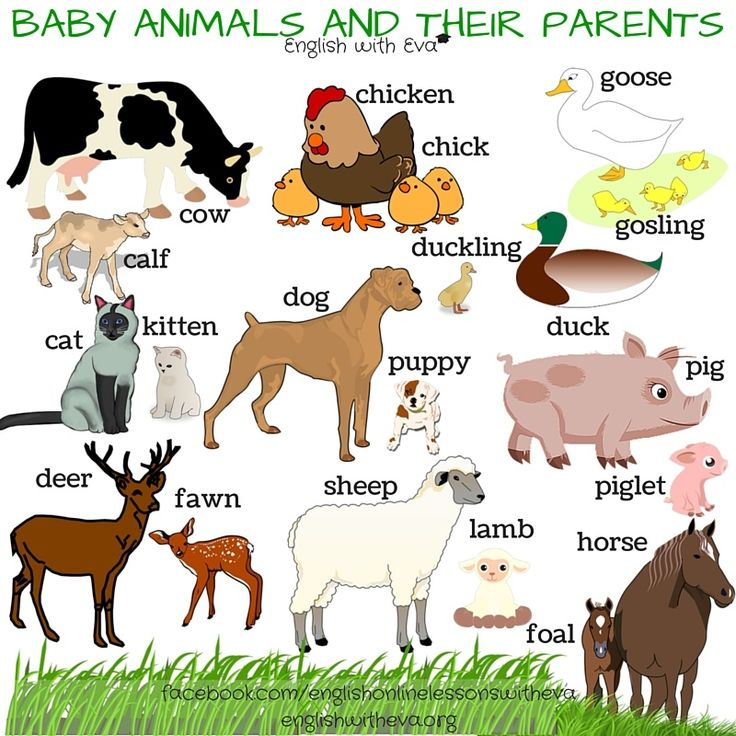 baby animals and their parents names Baby animal names