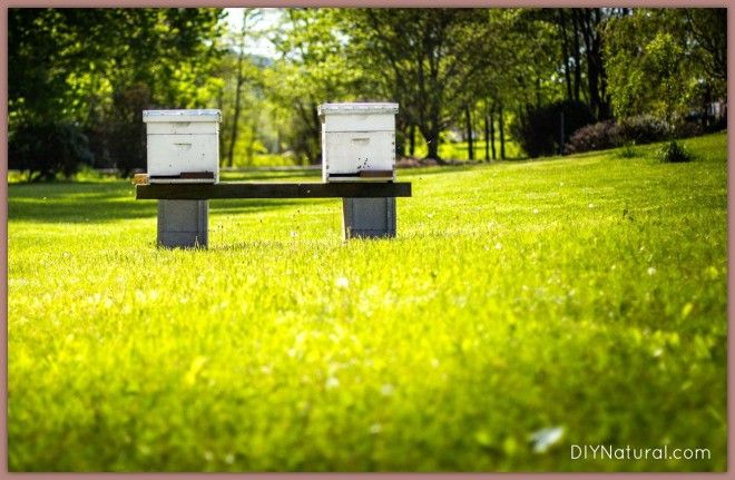 Bee Keeping: Learn How to Keep Bees Successfully - Scribd
