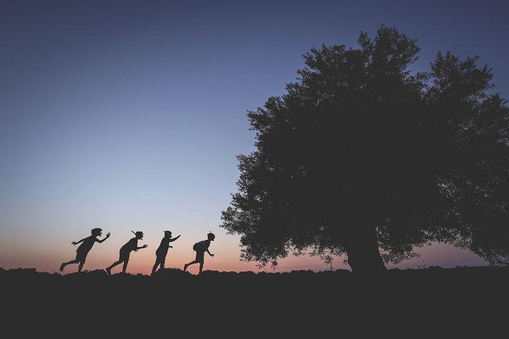 La nodosa maestosità̀ degli ulivi di Puglia, le chiome regali agitate dal maestrale e l'inconfondibile paesaggio che dal Gargano al Salento, passando per la Murgia, caratterizza l'intera regione, sono i protagonisti di un film. Anche il cinema scende in campo in difesa dell'albero simbolo del Mediterraneo che secondo il mito sarebbe stato il dono di Atena nella sfida con Poseidone ...