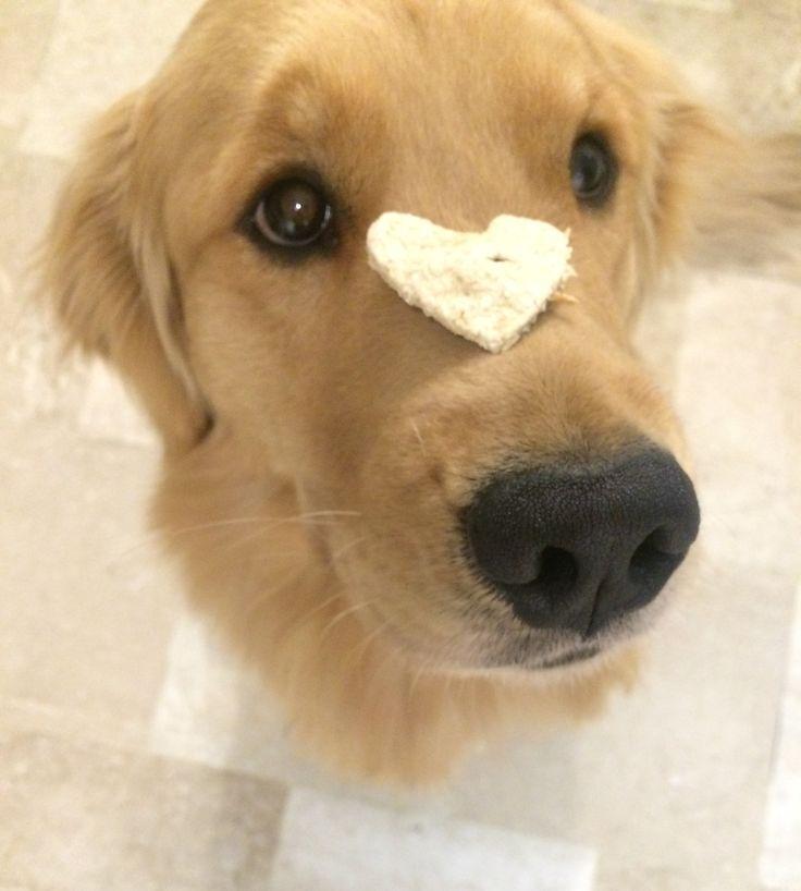🐶 Luna the Baker 🍪 Galletas 100% Naturales para nuestr@ Mejor Amig@ 🐶 Libres de: aditivos, colesterol, conservantes, azucar y harina 🏡 Hechas en casa como las de la 👵🏻 abuela 📌 INSTAGRAM @fourpawspet.colombia 📌 FANPAGE  https://m.facebook.com/fourpawspet.colombia/ 📌HASHTAG #fourpawspet #fourpawspetcolombia #dog #cookie #biscuits #dogbiscuits #treats #dogtreats #colombia