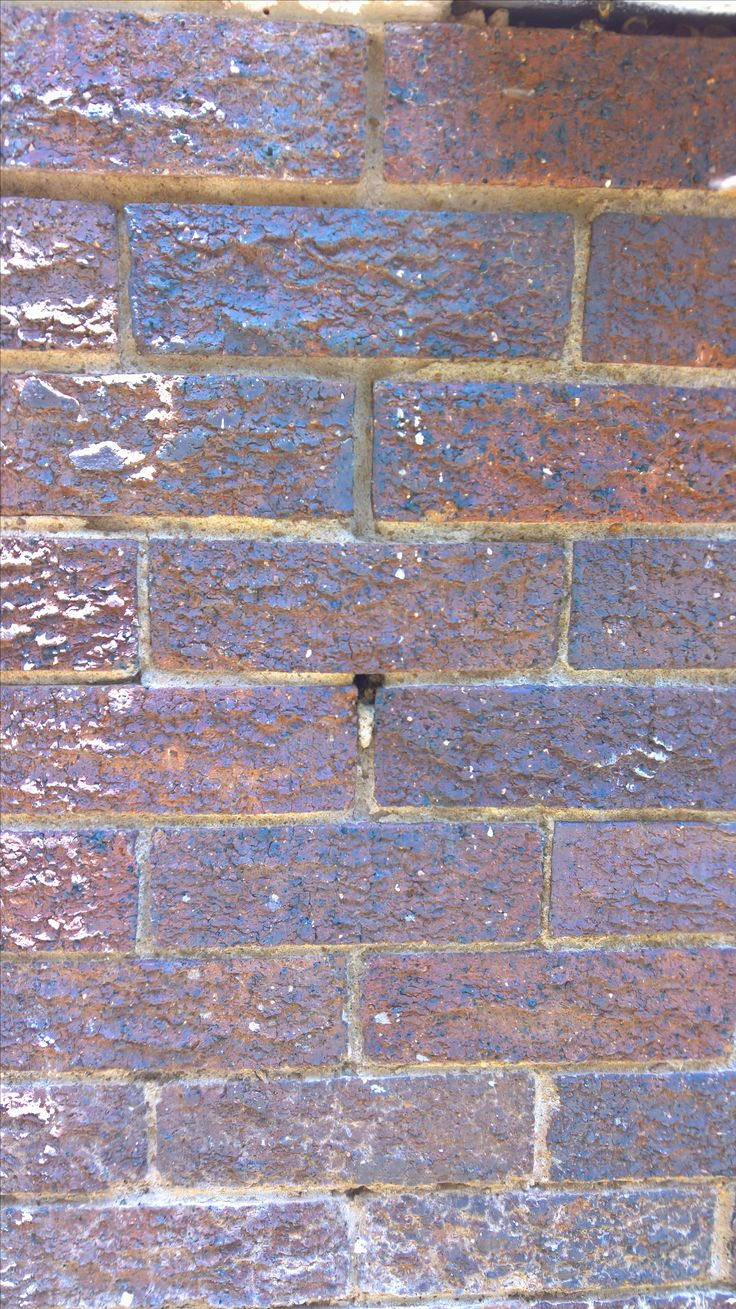 Inspirational Bee removal in Johannesburg bees in a hole in the wall