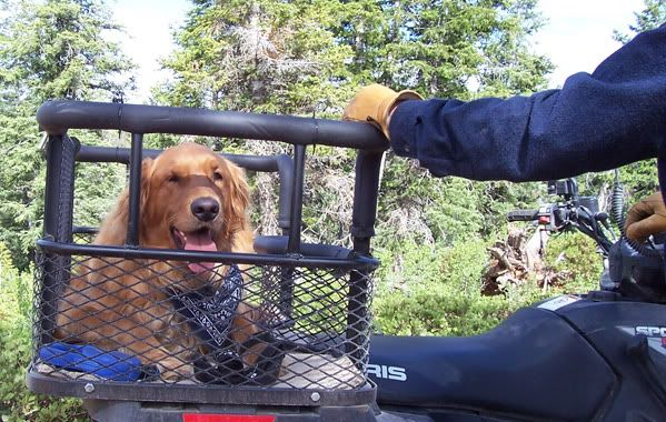 custom motorcycle dog carrier for large dog - Google Search