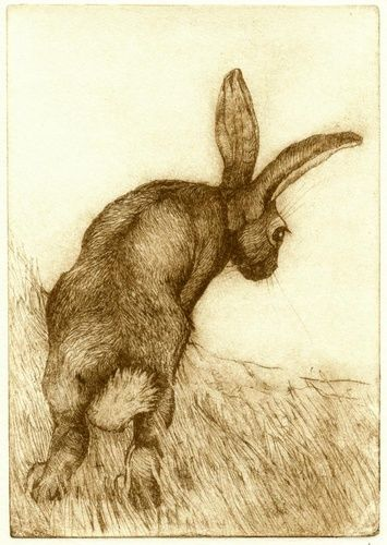 Hare (Looking Down) by Anna Ravenscroft