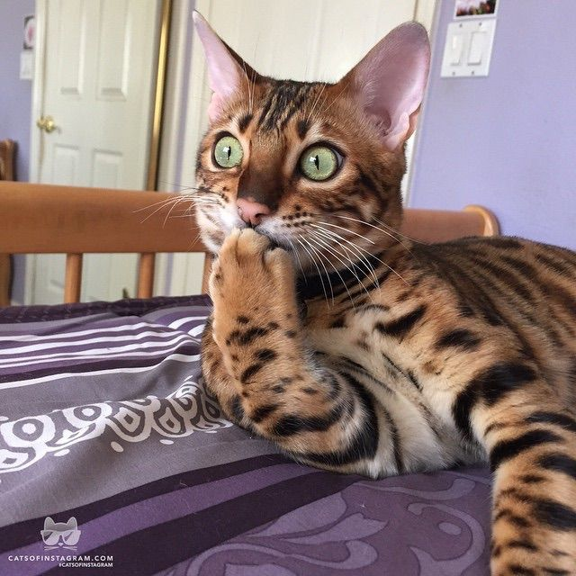"** ""Cats free on Craigslist haz been murdered or worse."""
