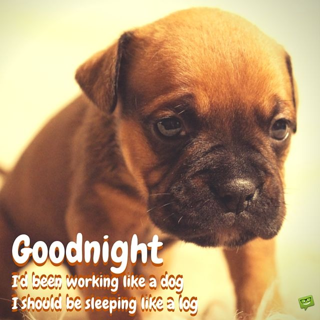 Image result for good Night blingee dogs