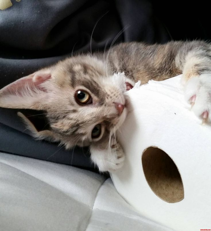 Kitten Titles For Essays - image 2