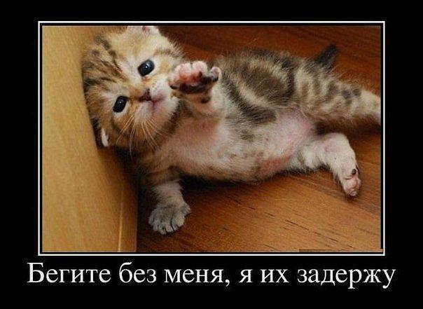 Смешные фото кошек, Цитаты о животных, Котята