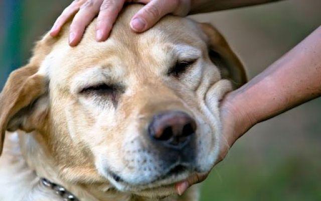 Blog incentrato sugli animali, varie notizie e curiosità! Questo è un blog incentrato sui nostri amici animali, l'articolo parla di dieci valide motivazioni per cui un cane ti cambia la vita, con curiosità e notizie divertenti, e cose che non vi aspetterest #animali #cane #cani #cambia #vita