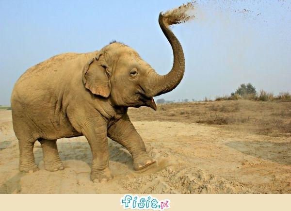 Niesamowite słonie