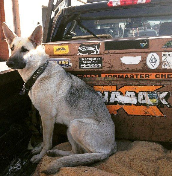 A dog and a KNAACK tool box- what else do you need?