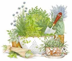 Kitchen Herbs - I think this is by Susan Branch, but am not sure...
