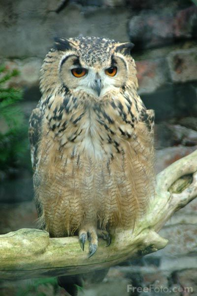 1000 images about Owls on Pinterest  Pictures of Original