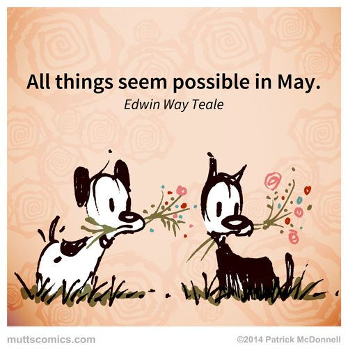 may quote