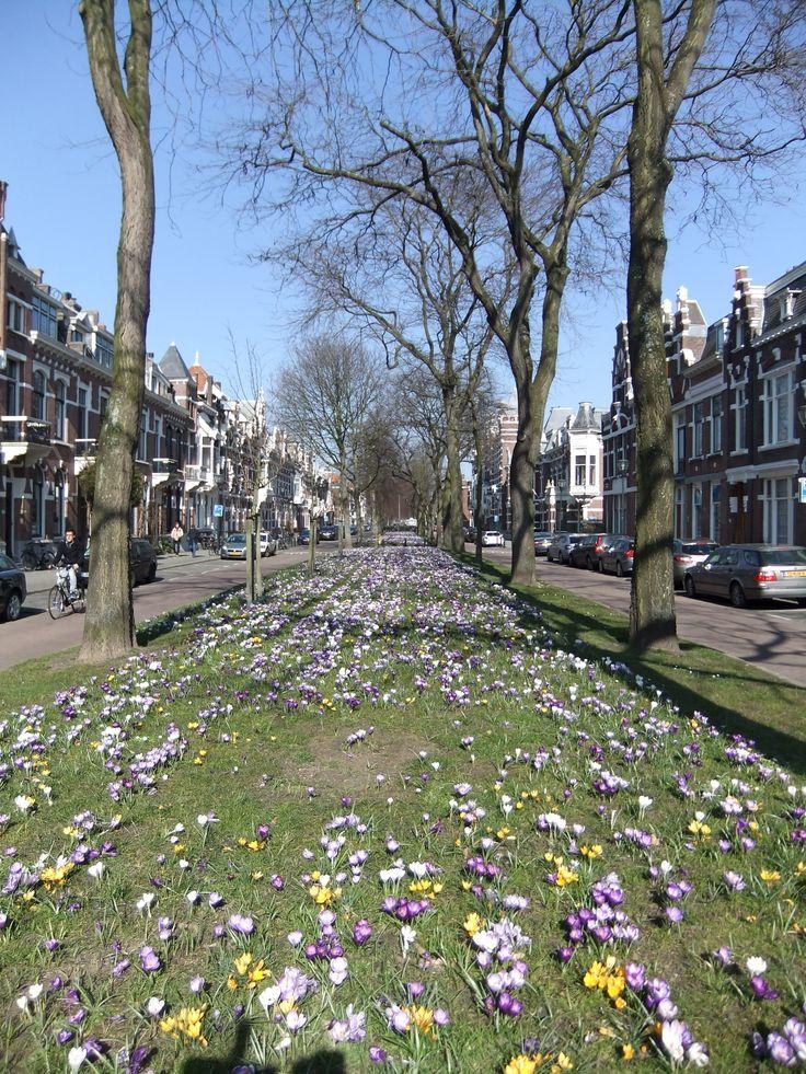 Avenue Concordia, Kralingen, Rotterdam