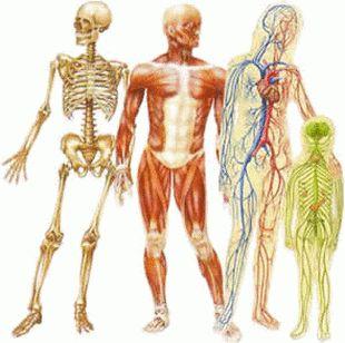Scopri Tutti i Beneficidel Saltare sul Trampolino Elastico La disciplina osteopatica considera l'organismo corpo-mente come un'unità biologica, in cui tutte le sue parti sono interconnesse e interrelate, permettendo che la struttura distribuisca i carichi e le forze sul corpo in maniera