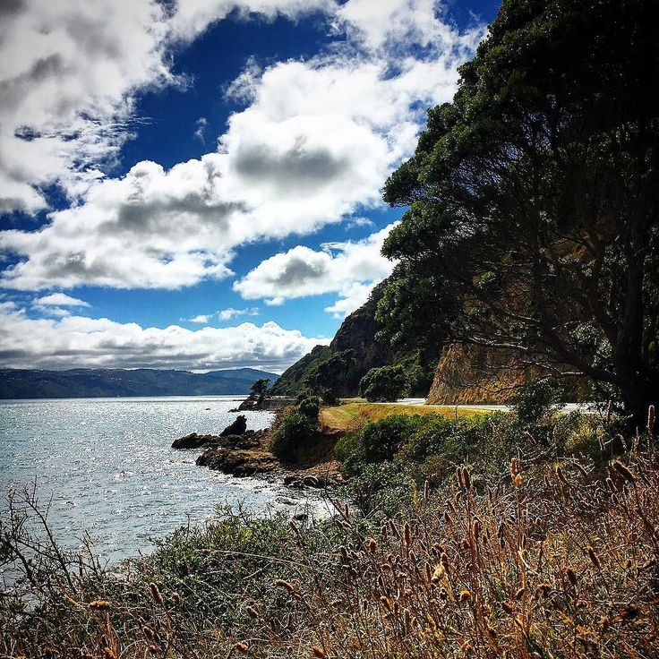 Shelly Bay Drive is exquisite. So many damn cool views! I was stopping every 30 seconds or so. I'll have my blog updated eventually with all the pictures.  #ig_captures #wellingtonlive #niceviewtho #ocean #roundthebays2016 #nature #islandlife #view #wellingtonlife #ig_photo_club #landscape #water #travel #picoftheday #shellybay #ilovenature #wellington #travelgram #newzealand #wanderlust #bestoftheday #evansbay #oceanview #nz #whywellington #wellingtononagoodday #miramar #travelnz…