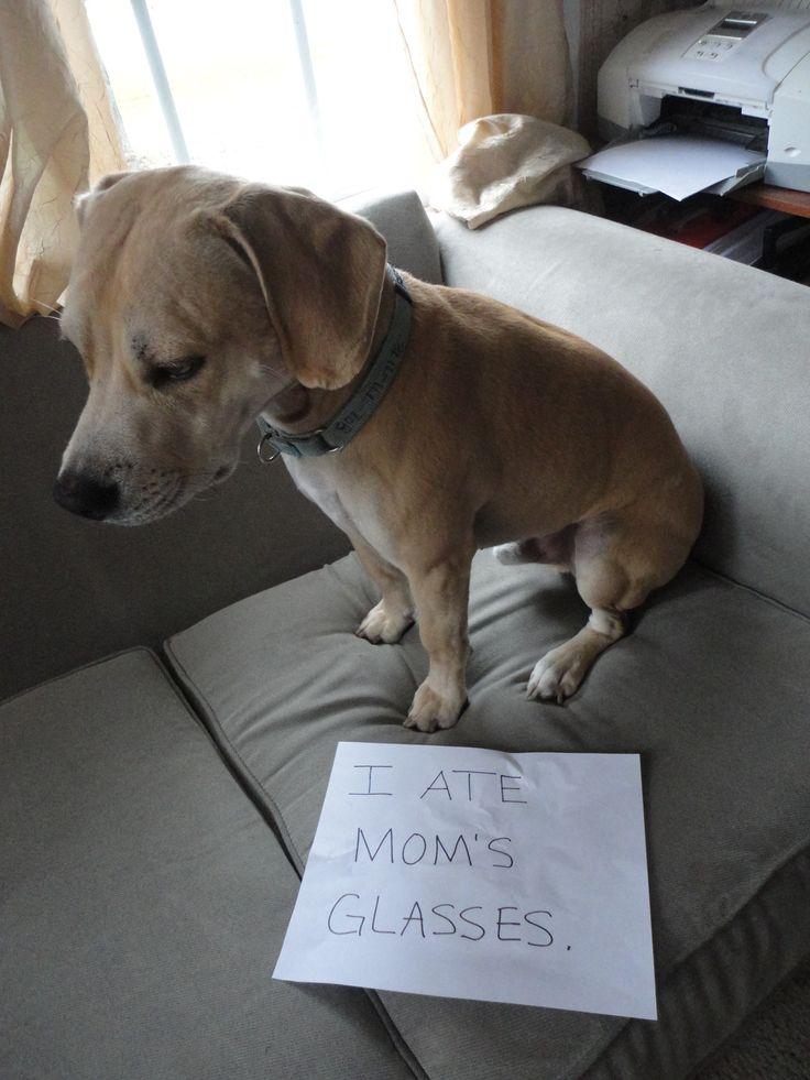 1000 images about ashamed dogs on pinterest dog shaming