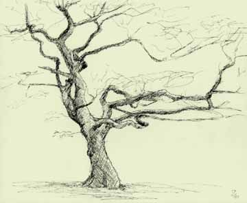 (Grasmere tree branches) Trees are very appealing: they vary enormously in mood and represent a challenge, with or without leaves.