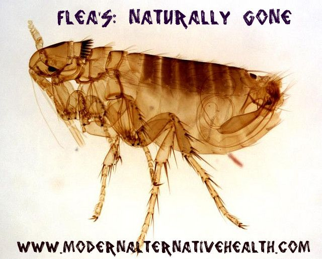 Flea's: Naturally Gone