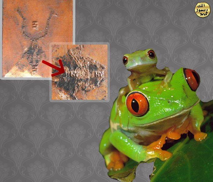 Kurbaga http://dusuneninsanlaricin.com/30-fosilde-evrim-teorisinin-cokusu/