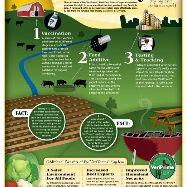 Ensuring Beef Safety Infographic