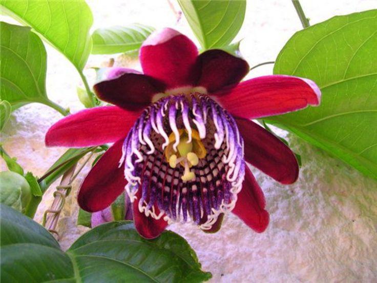 gratis desktop bakgrunner - Tropiske blomster: http://wallpapic-no.com/natur/tropiske-blomster/wallpaper-10095