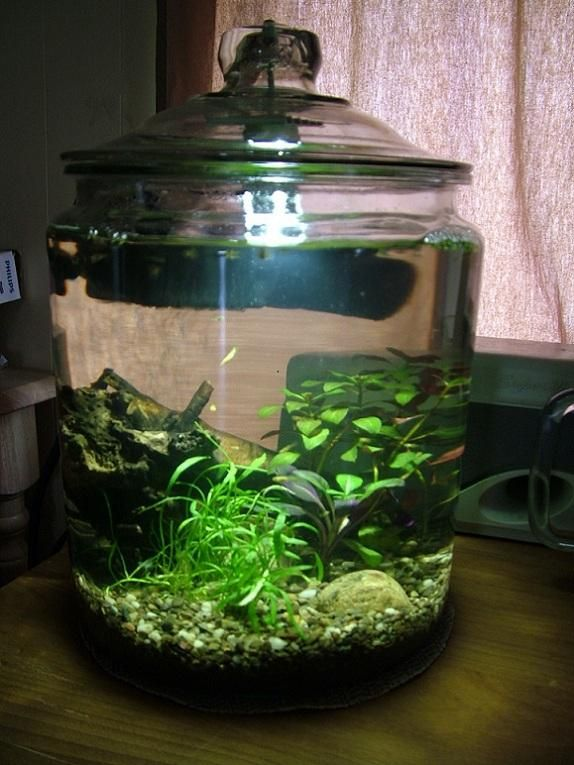 3 gallon betta jar, aprox $15, heated, filtered, live plants, rocks, driftwood