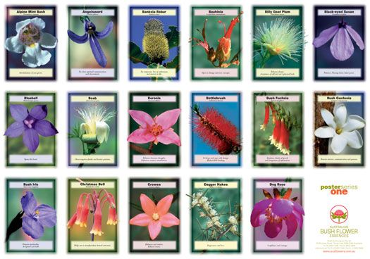 Bush Flower Essence chart 1