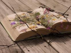 El recuerdo que deja un libro es más importante que el libro mismo.
