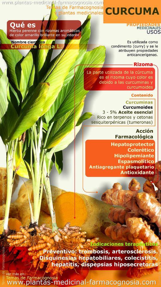 Propiedades de la cúrcuma. Infografia - Farmacognosia. Plantas medicinales