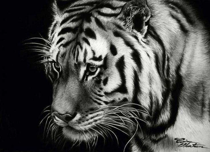 Tiger - Chill - Desen în Creion de Corina Olosutean // Tiger - Chill - Pencil Drawing by Corina Olosutean