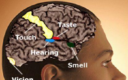 Cervello: alcune persone avrebbero capacità sensoriali e di percezione speciali - La sinestesia, fenomeno sensoriale/percettivo presente nel 2-4% delle persone, perdura nel tempo, sin dall'800 quando è stata scoperta, sino ai giorni nostri.