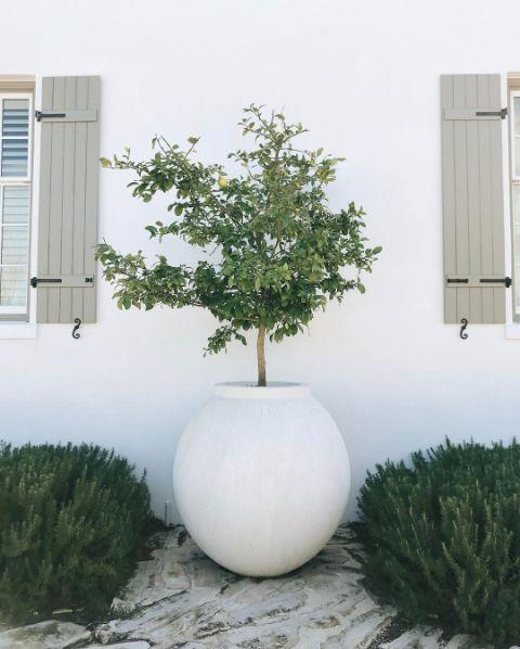 Style of flower pots; earthy, white, slightly modern