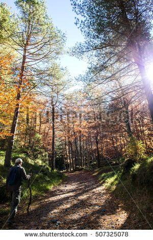 man walking in fantastic autumnal nature